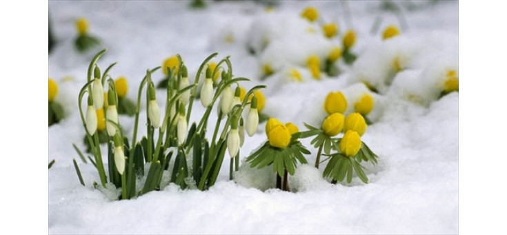 seminte-flori.ro